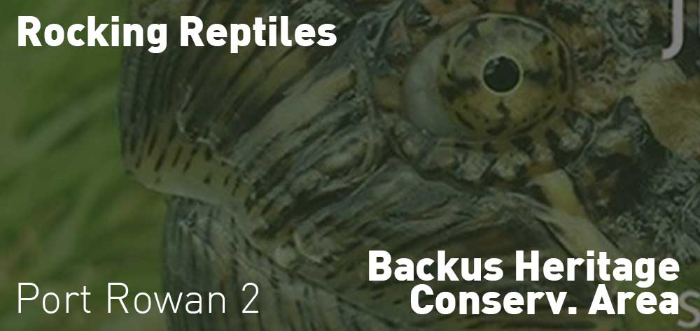 Rocking Reptiles | Backus Heritage Conservation Area | Saturday, July 20, 2019 | 2pm