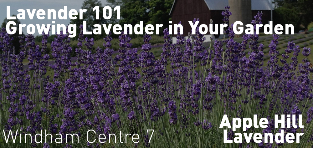 Lavender 101 - Growing Lavender in Your Garden is on Thursday June 4 at 7 PM.