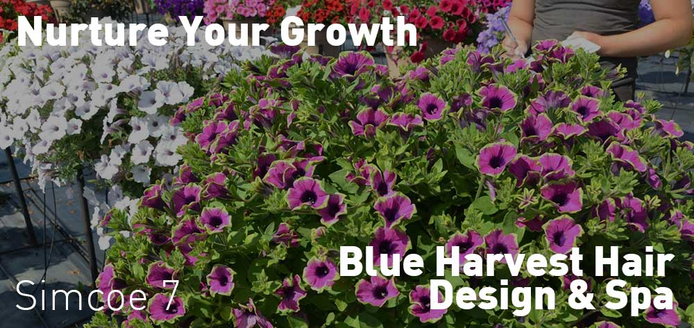 Nurture Your Growth | Blue Harvest Hair Design & Spa | Tuesday, June 19, 2018 | 7pm